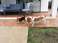 Ratos en casa con  George y Richie 01/17