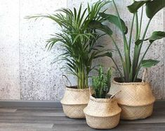 Modern hand-woven natural foldable sea grass belly basket/ wedding gift/laundry picnic storage basket/ Christmas gift in 2020 Plantas Indoor, Belly Basket, Deco Nature, Decoration Plante, House Plants Decor, Living Room Plants Decor, Concrete Planters, Interior Plants, Houseplants