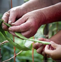 The United Nations declared 2014 the Year of Family Farming. Photo courtesy MarcoGovel/iStock/Thinkstock (HobbyFarms.com)