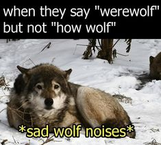 """When they say """"werewolf"""" but not """"how wolf"""" *sad wolf noises*..."""