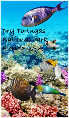 How to Visit Fort Jefferson, at the Dry Tortugas National Park, Florida Key West Florida, Florida Usa, Florida Vacation, Florida Keys, Vacation Trips, Vacations, Fl Keys, Vacation Ideas, Florida Travel Guide