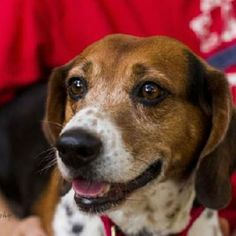 Charlie in Baton Rouge, Louisiana, is Save a Dog's adoptable dog of the week! Please Like and Repin his photo and let's see if we can find him a forever home! #Louisiana #SaveADog
