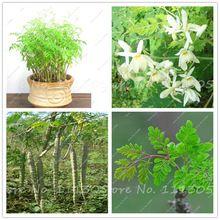 15 pcs/bag Moringa seeds moringa oleifera moringa tree seeds, Edible seeds DRUMSTICK TREE bonsai potted plant for home garden(China (Mainland))