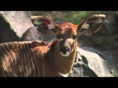 Brace yourself for the cute...Baby Boom at the San Diego Zoo Safari Park