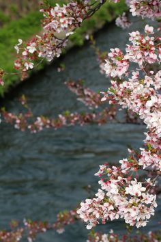Kyoto, Japan 左京区  (Photo : Gallery I) https://www.facebook.com/Kyoto.GalleryI
