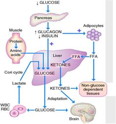 Should You Combine A Ketogenic Diet With Paleo? | time of ages | Pinterest | Keto, Low carb ...