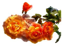 ZOOM DISEÑO Y FOTOGRAFIA: 30 flores vintage,png transparente,scrap,clipart
