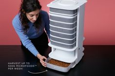 Grow delicious and healthy insects in your home!