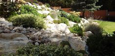 White rocks and green foilage freshness- rock garden- a zöld és fehér frissessége- sziklakert Garden, Plants, Garten, Gardens, Planters, Tuin, Plant, Planting, Yard