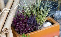 Vamos a realizar unas composiciones florales con Brezo y Gramíneas que será perfecta para la época de otoño.