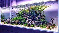Planted Aquarium, Aquarium Terrarium, Aquarium Fish Tank, Aquascaping, Aquarium Design, Bonsai Garden, Beautiful Fish, Freshwater Aquarium, Fresh Water