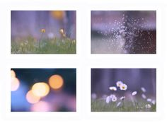 Violet Set - Floral and Bokeh - Flora And Fauna – 4 JPEG Included - Instant Download - 300dpi - 5472 x 3648 pix by BeeJayPhoto on Etsy