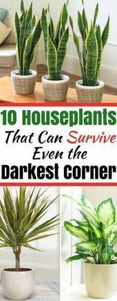 Houseplants That Can Survive in Even the Darkest Corner. Looking for plants that survive with little light? Here are 10 plants that can survive indoors in the dark! Herb Garden, Garden Plants, Plants Indoor, Garden Stakes, Garden Tools, Hanging Plants, Flowering Plants, Outdoor Plants, Shade Garden