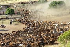 The Anna Creek cattle station in the South Australian Outback is by far the largest working cattle station (ranch) in the world