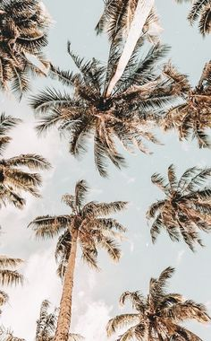 i love: the muted colors, the composition of the trees, the angle the photo was taken, the beachy/summer vibe