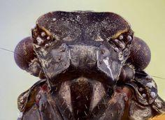Planeta Bicho » Fotógrafo captura imagens apavorantes de insetos » Arquivo