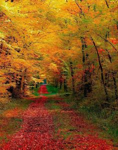beautiful Fall foliage in New England! Foto Nature, All Nature, Fall Pictures, Pretty Pictures, Amazing Pictures, Beautiful World, Beautiful Places, Simply Beautiful, Beautiful Forest