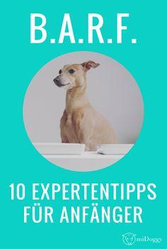 BARF | Hunde | Ernährung | Tipps | Anfänger