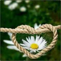 Flower Phone Wallpaper, Nature Wallpaper, My Love Photo, 90 Day Plan, Daisy Love, Beautiful Rose Flowers, Heart Images, Jolie Photo, Green Life