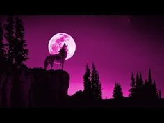 wolf howling sound effect scary , scary animals sounds , animals screaming at night please check other videos khmer traditional instrumental Wolf Howl Sound, Halloween Sounds, Scary Animals, Wolf Howling, Sound Effects, Scary Scary, Taipei, Youtube, Moon