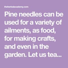 Pine needles can be used for a variety of ailments, as food, for making crafts, and even in the garden. Let us teach you 8 ways to use pine needles.