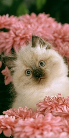 Kittens And Puppies, Baby Kittens, Cute Cats And Kittens, Kittens Cutest, Cute Baby Cats, Cute Baby Animals, Animals And Pets, Beautiful Kittens, Pretty Cats