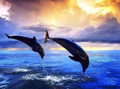Watch dolphins swim