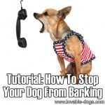 How To Stop Your Dog From Barking (2 tutorials) Pet Accessories, Dog Toys, Cat Toys, Pet Tricks
