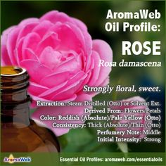 Rose Absolute and Rose Otto Profile