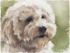 Painting white fur - advice needed - Page 2 - WetCanvas Watercolor Animals, Watercolor Paintings, Painting Fur, Watercolour, White Dogs, White Fur, Yorkshire Terrier Puppies, Cockapoo, Animal Paintings
