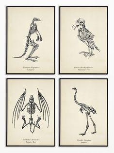 Free Animal Skeleton Printables (Vintage Style) is part of Animal skeletons Our vintagestyle animal skeleton printables aren& just for Halloween they& make a stunning gallery wall no matter - Halloween Wood Crafts, Chic Halloween, Holidays Halloween, Vintage Halloween, Fall Crafts, Halloween Decorations, Halloween Party, Halloween Wall Decor, Halloween Inspo