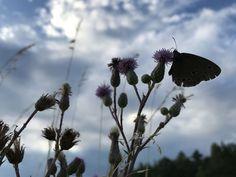 12 von 12 im Juli - Flugobjekt kleiner Schmetterling Recycling, Bunt, Plants, Viajes, Creative, Plant, Upcycle, Planets