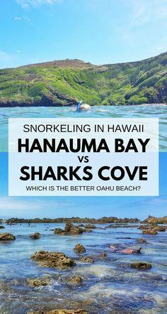 Best snorkeling spots on Oahu. Things to do in Oahu Hawaii. Hanauma Bay or Shark's Cove. Snorkel near Waikiki, Honolulu. Hawaii vacation ideas planning tips. Oahu Hawaii, Kauai, Hawaii Travel, Travel Usa, Beach Travel, Travel Tips, Hawaii Beach, Hawaii Life, Travel Ideas