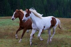 Search: horse | Flickr