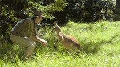 This guy bitch slapping his mate. | 19 Times Kangaroos Proved They're Actually Assholes