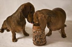 Cute dog images, Two dachshund dogs  A Healthy Dog is a Happy Dog / www.PetWellbeing.org