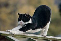 猫流の見事な伸びも岩合さんはすかさず一枚に収めます。