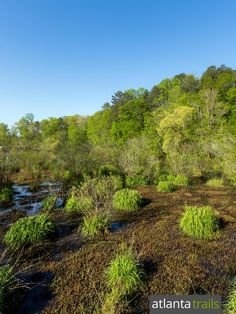 Top Atlanta running trails: run the Ivy Creek Greenway in George Pierce Park in Suwanee