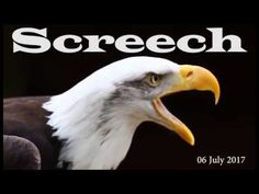 Bald Eagle Ministries' Screech 20170706