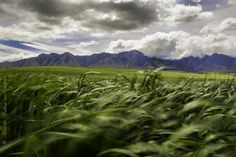 Overberg | South Africa #SouthAfrica Sa Tourism, Beautiful Homes, Beautiful Places, Green Ocean, Field Of Dreams, Countries Of The World, Farm Life, Wonders Of The World, Landscape Photography