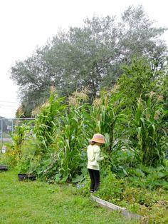 Une élève devant le jardin des 3 soeurs (thématique amérindienne). Les maïs profitent de l'azote des haricots qui poussent à proximité, lesquels peuvent grimper à leur tiges; les courges s'étalent entre les maïs et font un couvre-sol qui empêche la mauvaise herbe de pousser. Dans ce jardin-ci du basilic et des tomates ont aussi été intégrés.