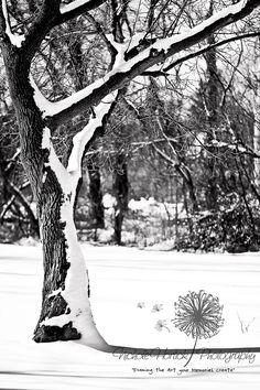 Landscape Photography with Nichole Hortick Photography: A Winter's Walk  A Michigan Photographer nicholehortick.com