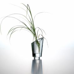 It could also be called a little piece of art, which was given a function. Our Limited edition vase, with its spectacular glass quality, is heavy enough to counterbalance a branch, as well as a heavy flower stem, despite its size.
