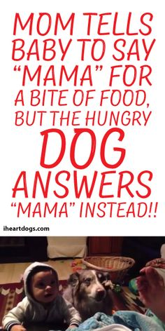 """Mom Tells Baby To Say """"Mama"""" For A Bite Of Food, But The Hungry Dog Answers Mama Instead!"""