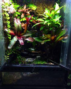 Frog Tank, Tanks, Dart Frogs, Toad