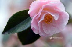 fleurs-et-champis: Gautier Marguerite par akthuro