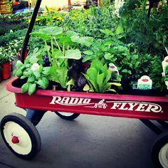 How to Plant a Fall Garden - Wendys Hat #garden #gardeningtips