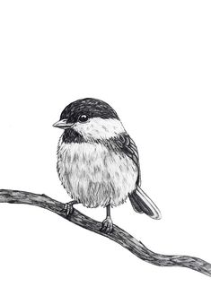chickadee original Pencil Drawing 89 by Rachelle Dyer Bird Pencil Drawing, Landscape Pencil Drawings, Pencil Art Drawings, Bird Drawings, Art Drawings Sketches, Animal Drawings, Save Animals Drawing, Pencil Sketches Landscape, Drawing Birds
