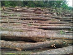 Akác oszlop, akác rönk Texture, Wood, Surface Finish, Woodwind Instrument, Timber Wood, Trees, Pattern