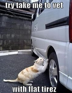 Try to take me to the vet
